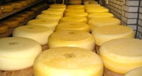 cheese-shelf4