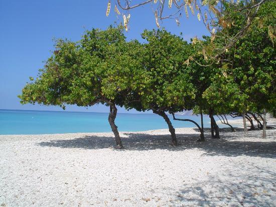 shade-on-a-beach